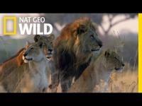 Official Trailer | Savage Kingdom
